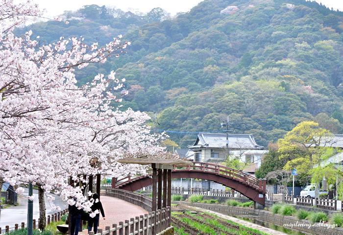 3周年 & 桜_f0234062_22471585.jpg