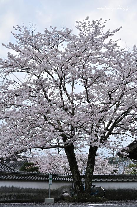 3周年 & 桜_f0234062_22472586.jpg