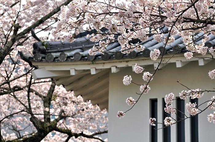 3周年 & 桜_f0234062_22473046.jpg