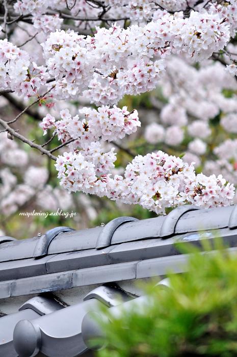 3周年 & 桜_f0234062_22473421.jpg