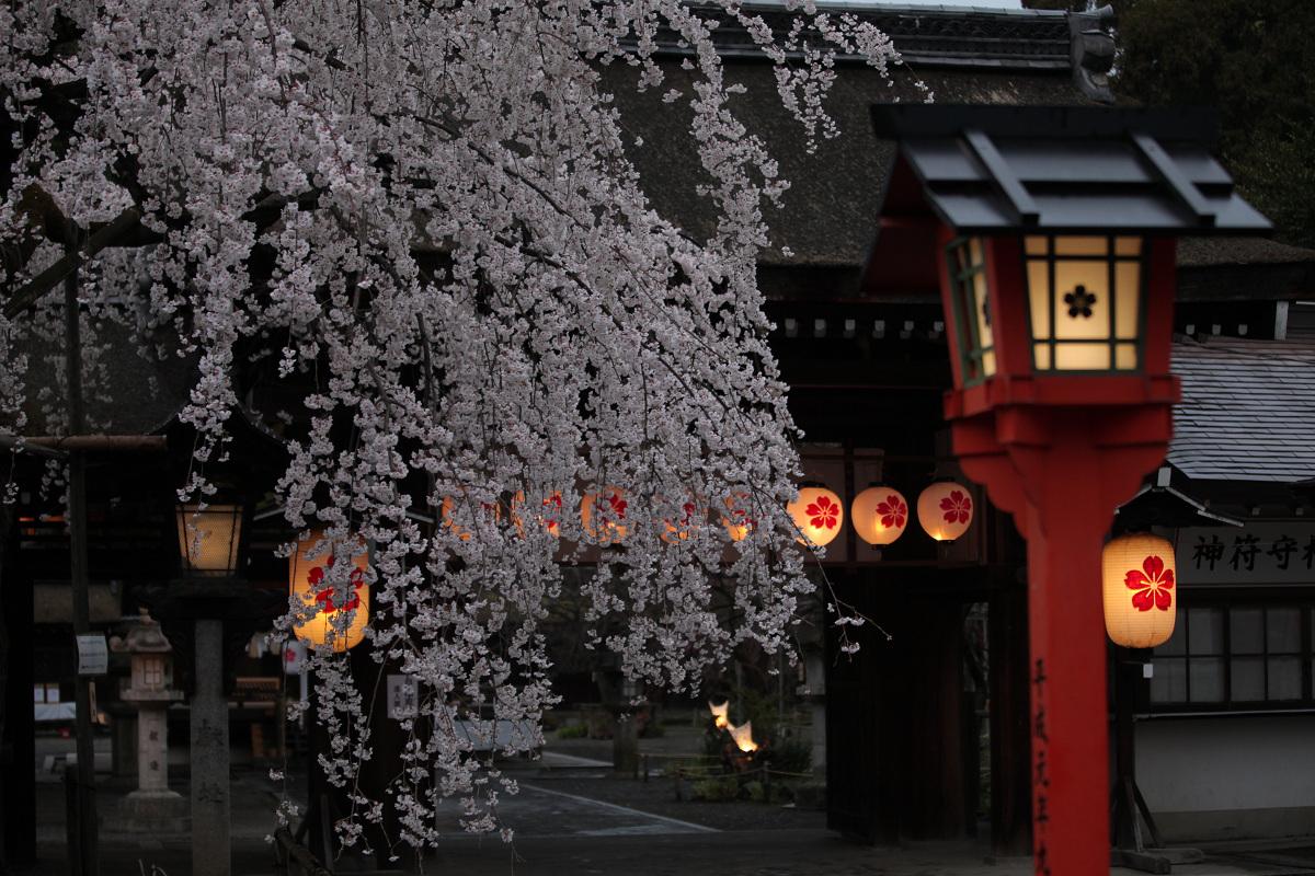 桜 2013 <京都 平野神社> _f0021869_23584354.jpg
