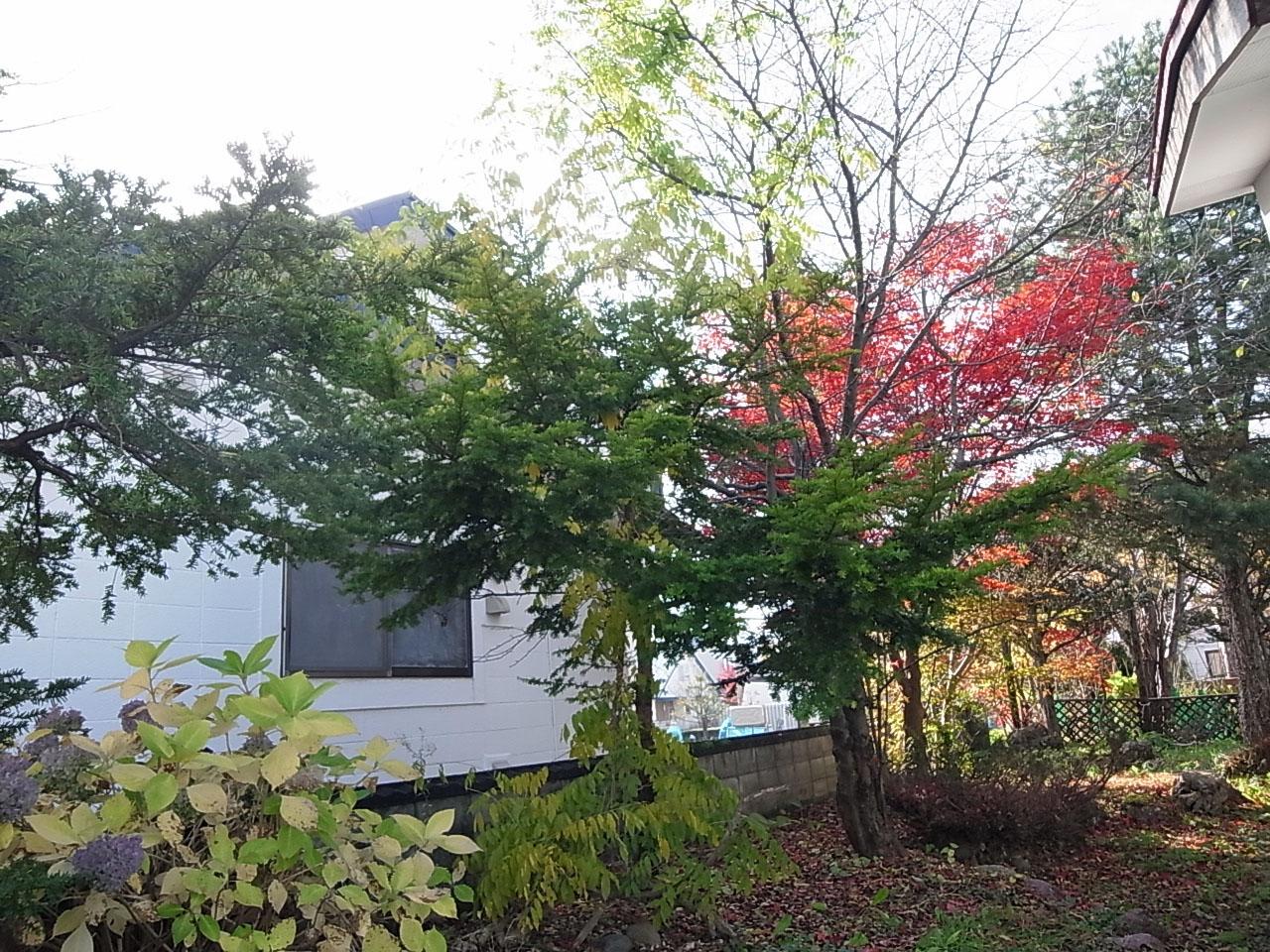 いえのえほん74-1/植栽としての樹木_c0189970_18354534.jpg
