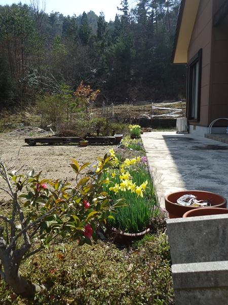 咲かない桜!!_a0199979_15185753.jpg