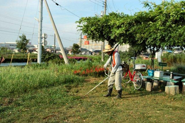 臨時の水やりと草取りを行いました。_d0257693_12383131.jpg