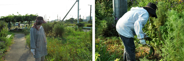 臨時の水やりと草取りを行いました。_d0257693_1239351.jpg