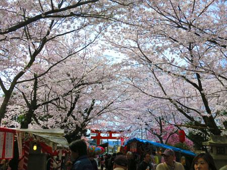 京都の桜はイイ感じな今週。_c0108595_020274.jpg