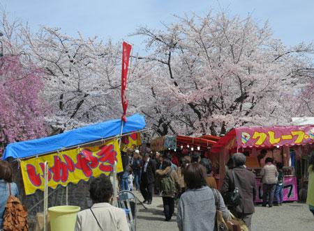 京都の桜はイイ感じな今週。_c0108595_23472334.jpg