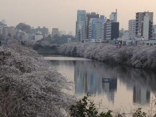 2013年の桜(8)_b0129897_7272261.jpg