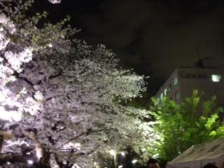 2013年の桜(8)_b0129897_8291593.jpg