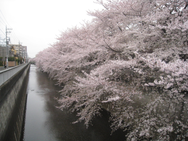中野アートフェスタ2013 _c0013698_21574370.jpg