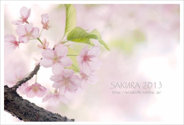 春色に染めて♯2_c0091505_22501952.jpg