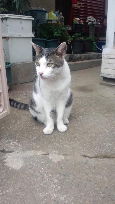 【猫】携帯写真_f0141609_23425615.jpg