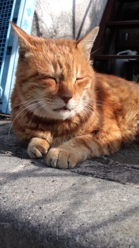 【猫】携帯写真_f0141609_2342629.jpg