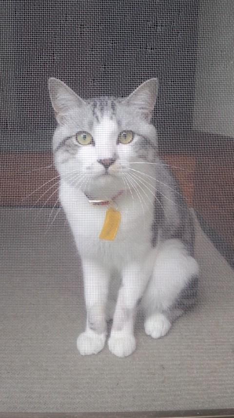 【猫】携帯写真_f0141609_2343053.jpg