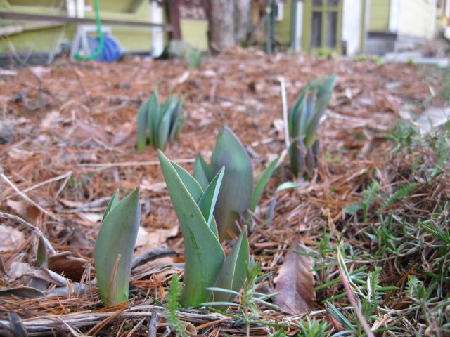 春の芽ぶき♪_f0146620_10304569.jpg