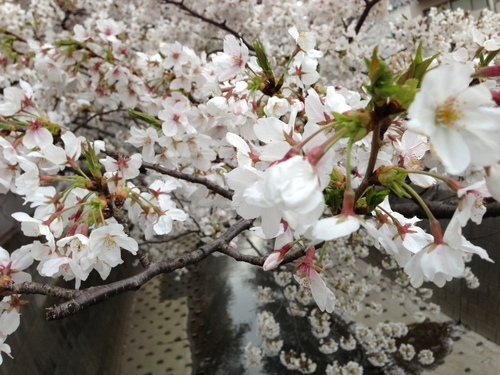 今週のお花とセール情報_a0200423_20452280.jpg