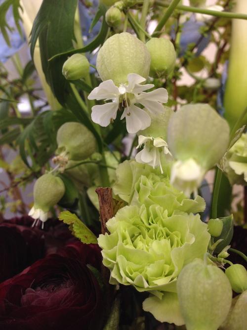 今週のお花とセール情報_a0200423_20512882.jpg