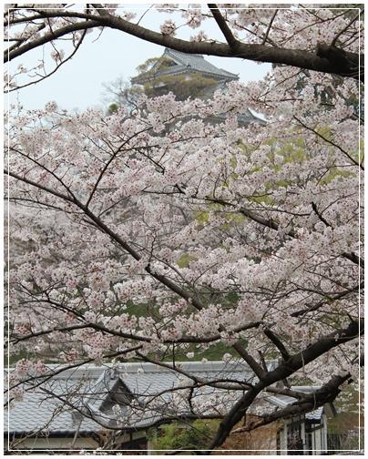 熊本・天草旅行    その1 農家の食卓_c0141025_017424.jpg