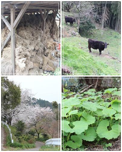 熊本・天草旅行    その1 農家の食卓_c0141025_0333621.jpg