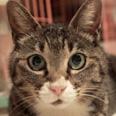 ねこひと会が保護した東日本大震災被災猫 No.C001〜150_e0316841_2123780.jpg