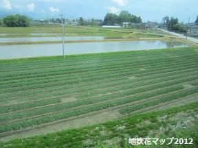富山地鉄の花便り2013@チューリップと菜の花_a0243562_1621575.jpg