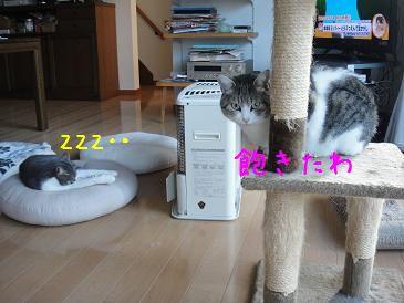 c0140863_2012444.jpg