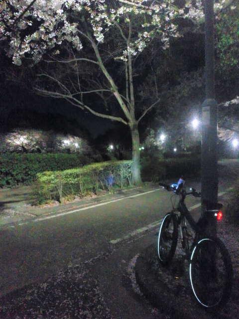 平成25年4月3日名古屋城近辺を花見がてらポチャリング_c0155364_1512824.jpg