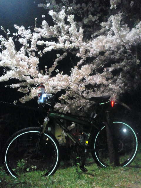 平成25年4月3日名古屋城近辺を花見がてらポチャリング_c0155364_1532671.jpg