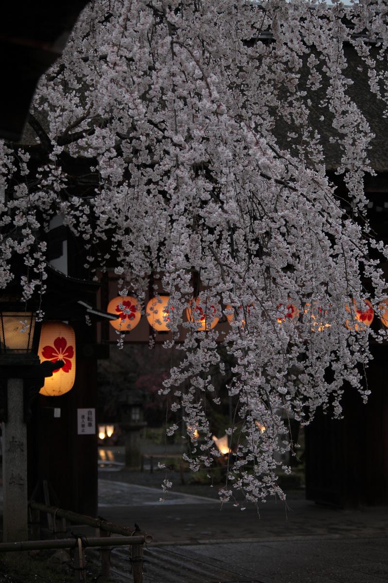 桜 2013 <京都 平野神社> _f0021869_012977.jpg
