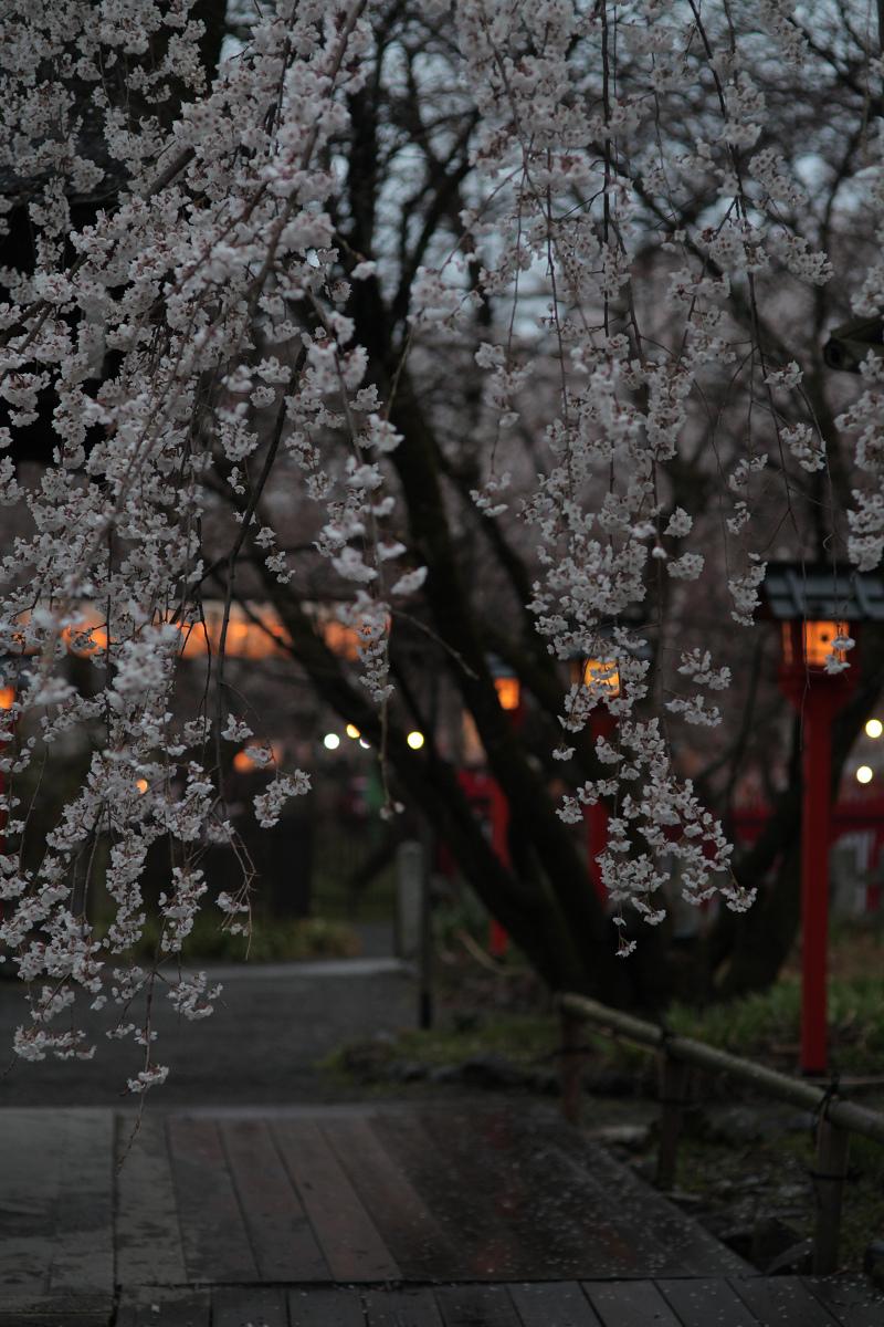 桜 2013 <京都 平野神社> _f0021869_015068.jpg