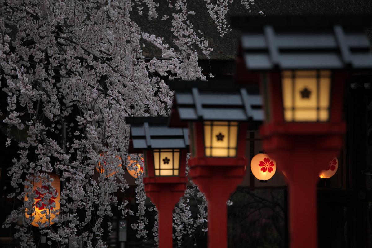 桜 2013 <京都 平野神社> _f0021869_23594653.jpg