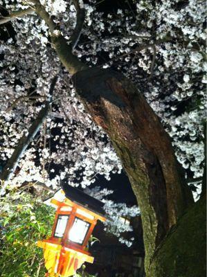 祇園 白川の桜_c0180971_0385341.jpg