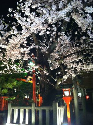 祇園 白川の桜_c0180971_0385390.jpg