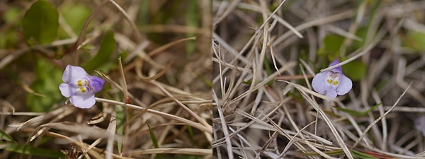 雑草にレンズを向けて_b0175688_23404698.jpg