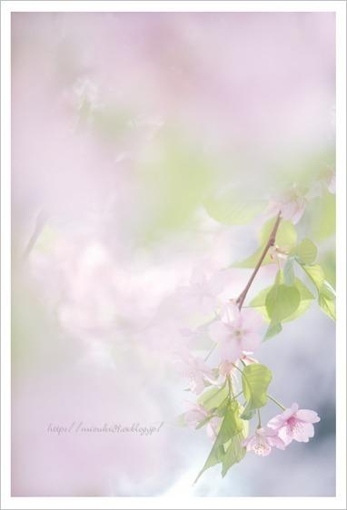 春色に染めて♯2_c0091505_13864.jpg
