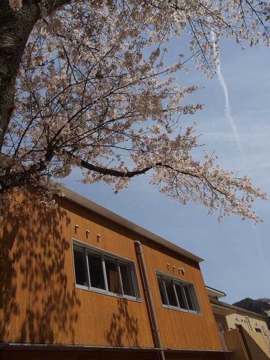 湯来ロッジ周辺の桜など_c0116915_23543316.jpg