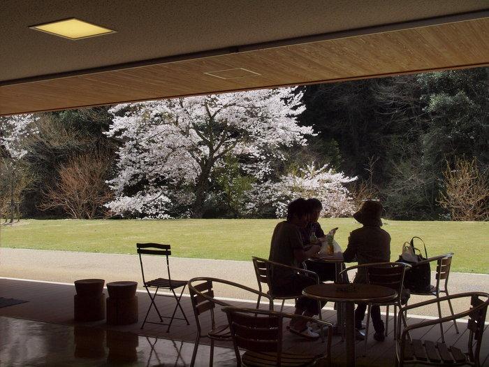 湯来ロッジ周辺の桜など_c0116915_23562561.jpg