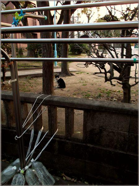 「大阪レトロ紀行~見つからなかった家のある風景」_d0133024_14213138.jpg