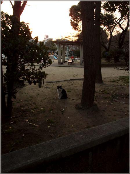 「大阪レトロ紀行~見つからなかった家のある風景」_d0133024_14214226.jpg