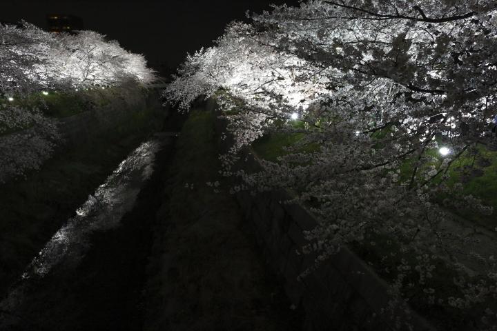 桜花爛漫_f0253927_01631.jpg