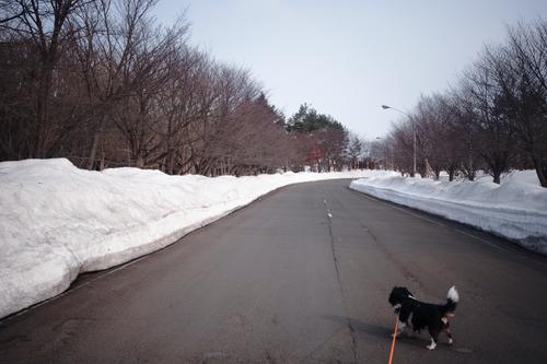 3.6倍の積雪て・・・・・・・・_c0051132_20552926.jpg