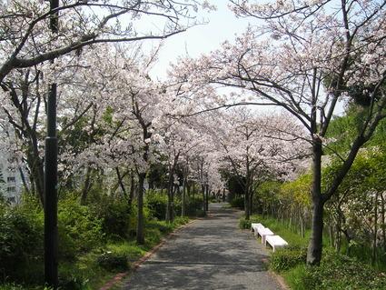 桜 咲いた!!_b0096638_11121537.jpg
