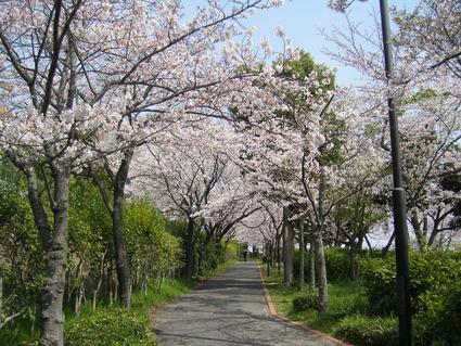 桜 咲いた!!_b0096638_11131086.jpg