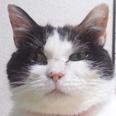 ねこひと会が保護した東日本大震災被災猫 No.C001〜150_e0316841_12441956.jpg