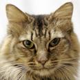 ねこひと会が保護した東日本大震災被災猫 No.C001〜150_e0316841_12462061.jpg