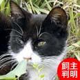 ねこひと会が保護した東日本大震災被災猫 No.C001〜150_e0316841_170629.jpg