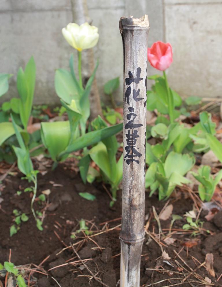 葬花_f0070743_1414739.jpg