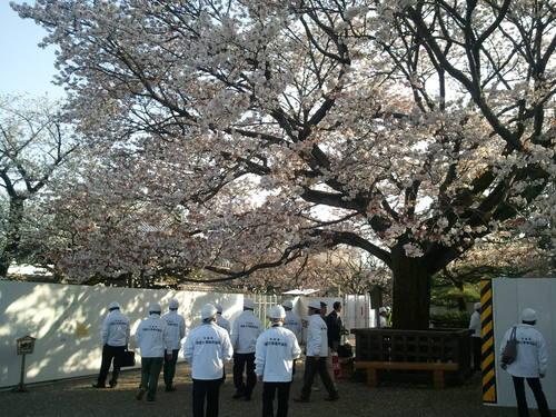 弘道舘の桜_c0213352_13384694.jpg
