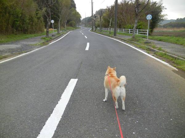 '13,4,5、(金)田舎道の竹の子~!_f0060461_7311147.jpg