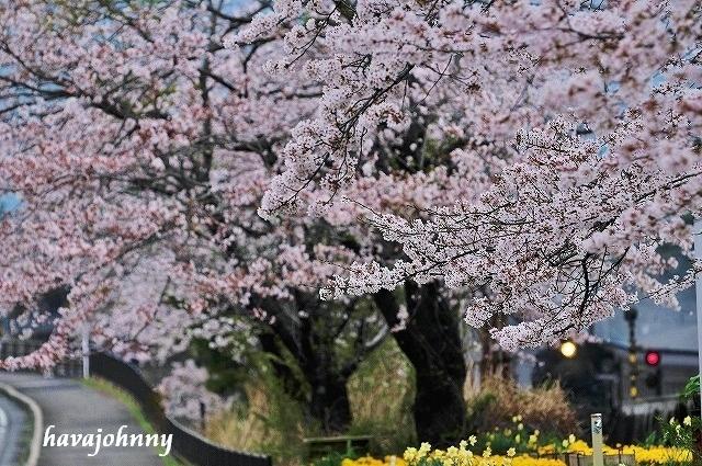 花から牡丹餅_c0173762_22543759.jpg